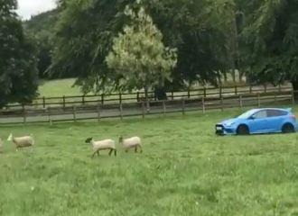 Τσοπάνης με Ford Focus RS (+video)