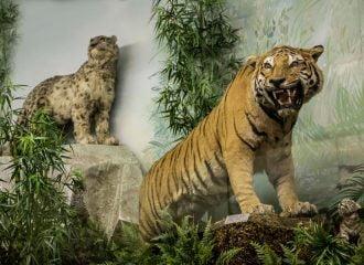 Μουσείο Γουλανδρή Φυσικής Ιστορίας: Eπαφή με τη φύση