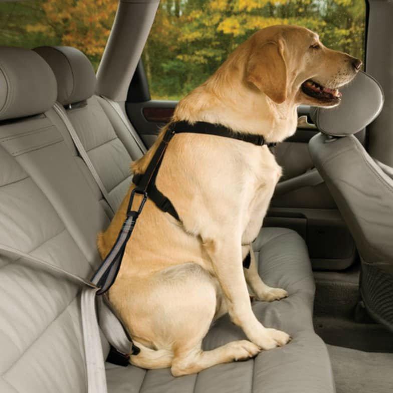 0c4d276116 Πώς μεταφέρουμε με ασφάλεια το κατοικίδιό μας  - AutoGreekNews