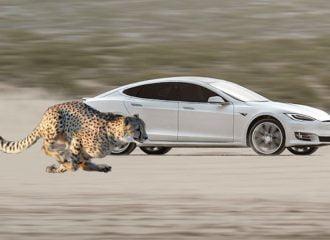 Τι κοινό έχει το Tesla Model S με το τσιτάχ; (+video)