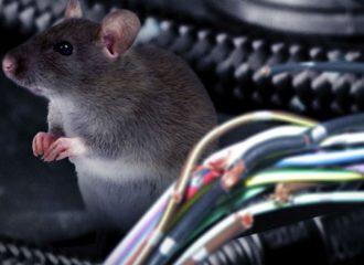 Γιατί τα ποντίκια τρώνε τα καλώδια στα αυτοκίνητα;